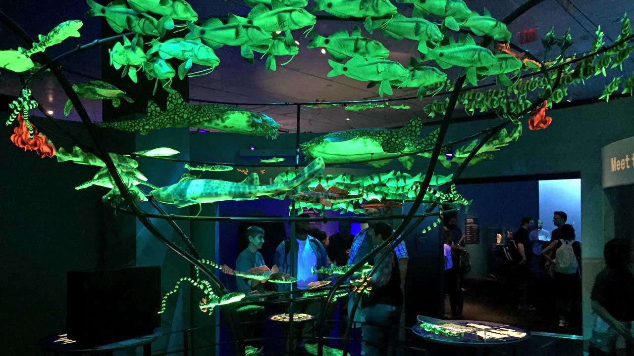 biofluorescence